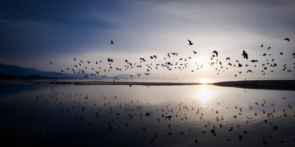 reflective dawn